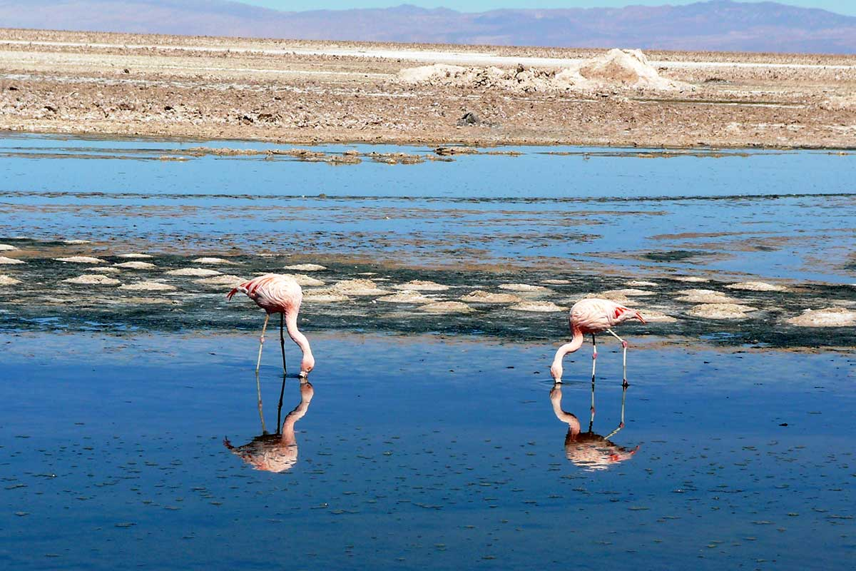 Parc national Los Flamencos