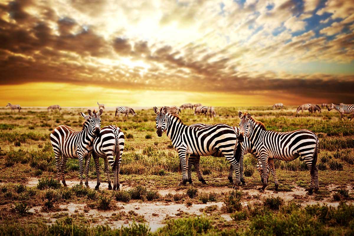Circuit Tanzanie sauvage + Extension sur l'île de Zanzibar