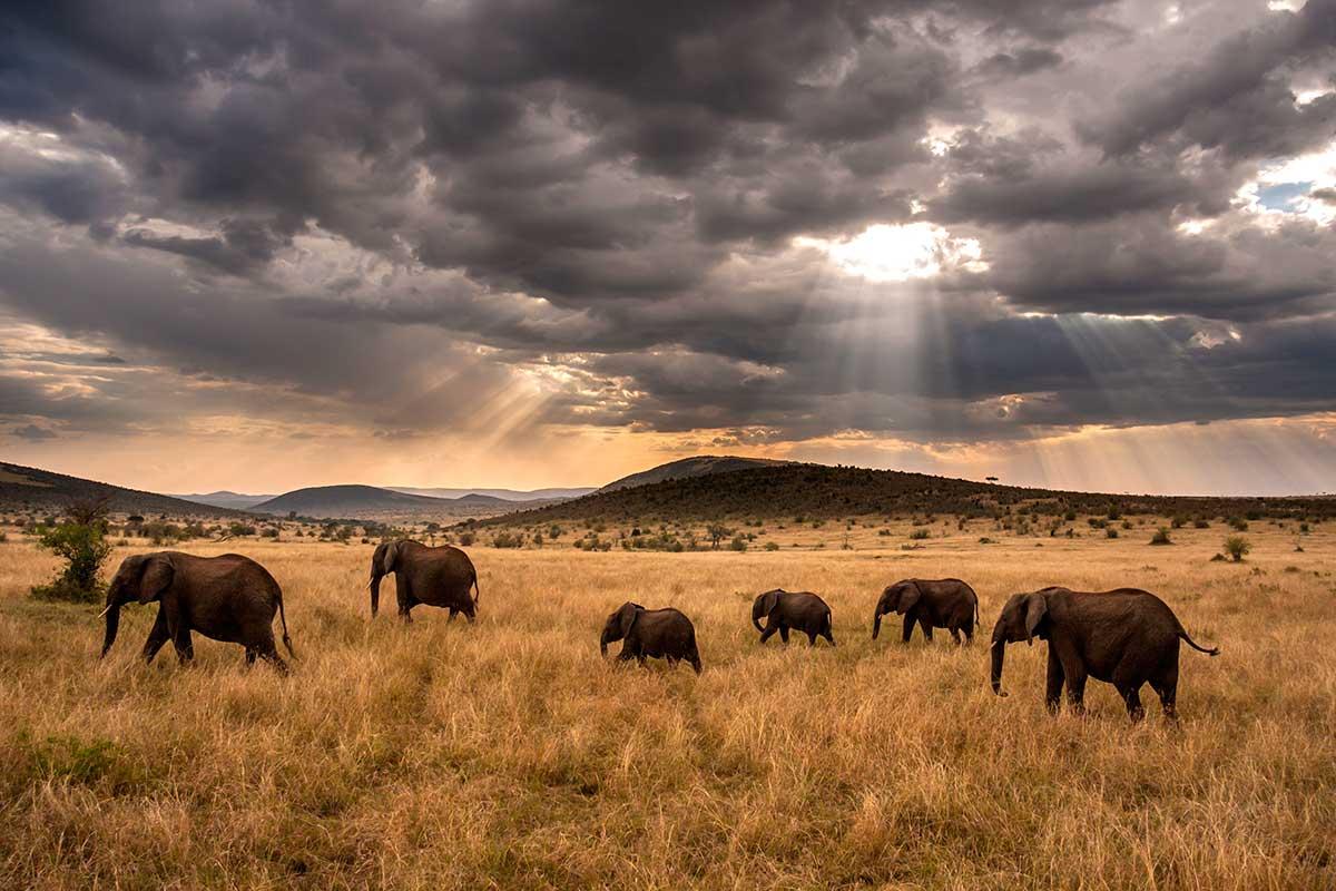 Circuit Safari Kilimandjaro